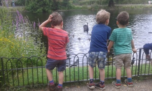 watching ducks