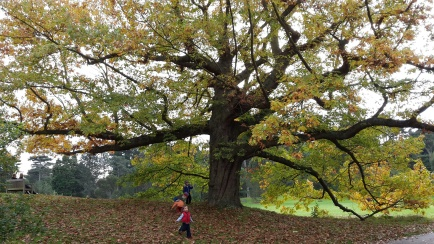 Autumn tree with boys