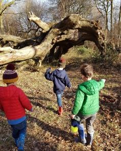 three boys and a tree